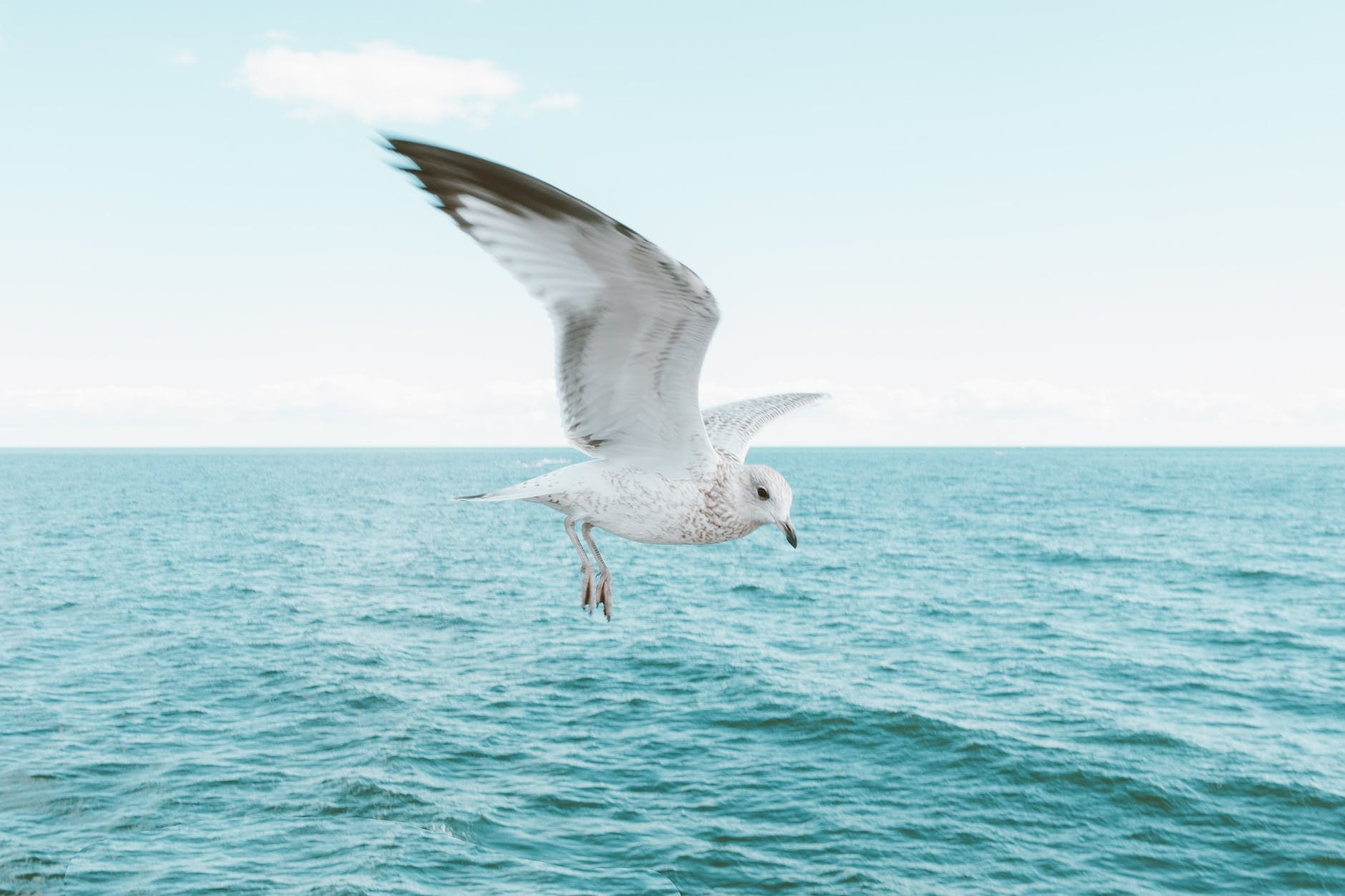 seagull in clear sky over sea