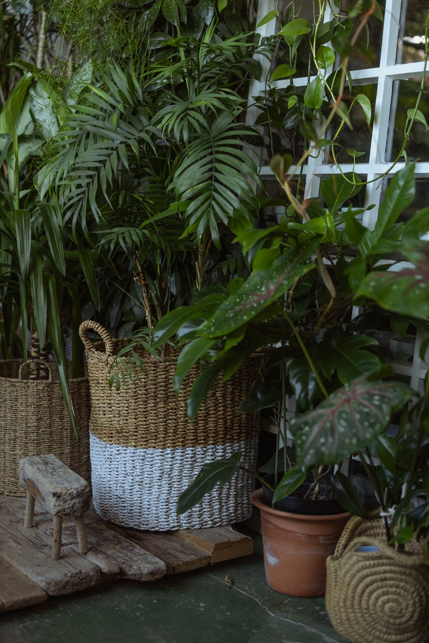 photo of green plant on wicker basket